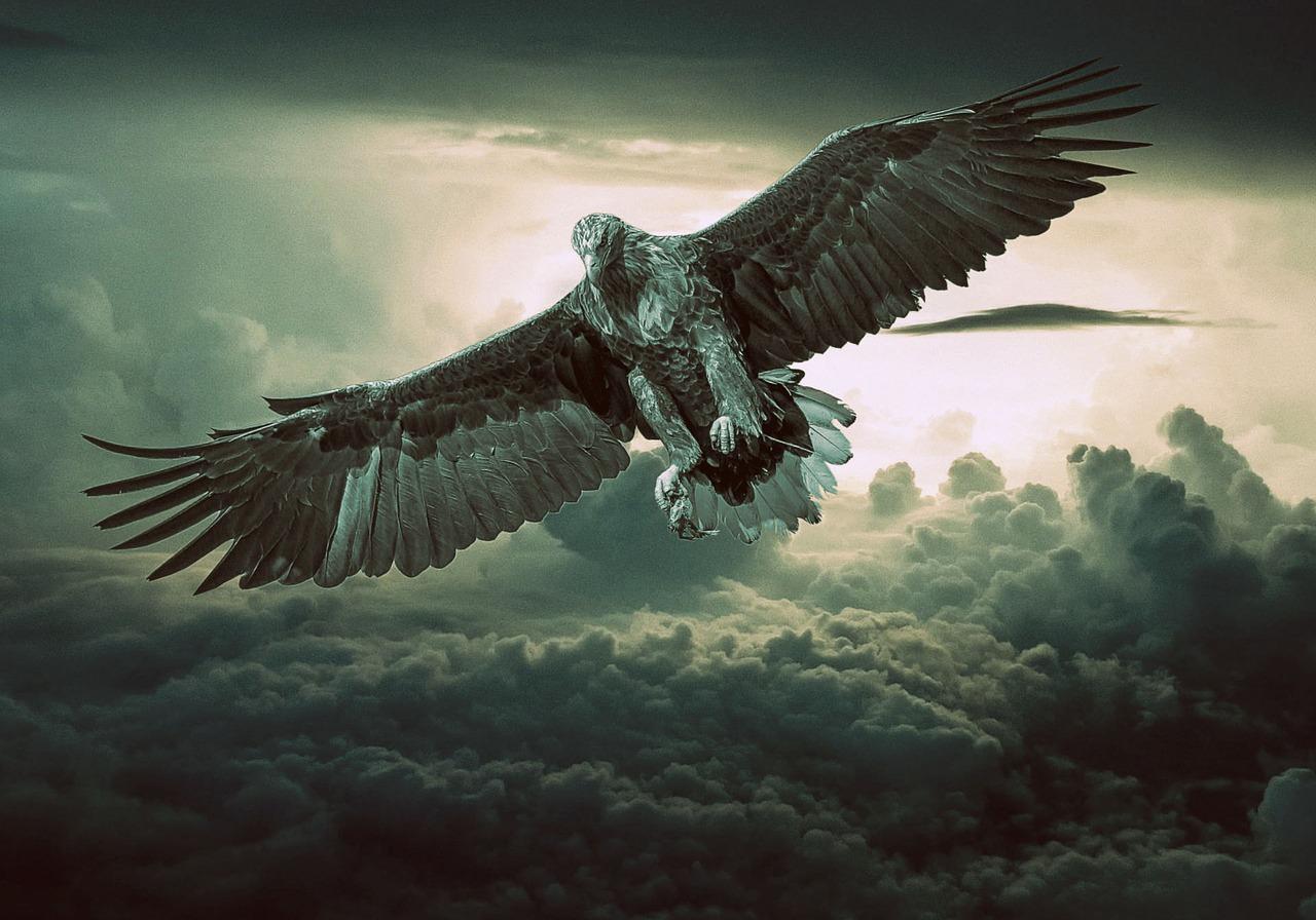 eagle-2044134_1280