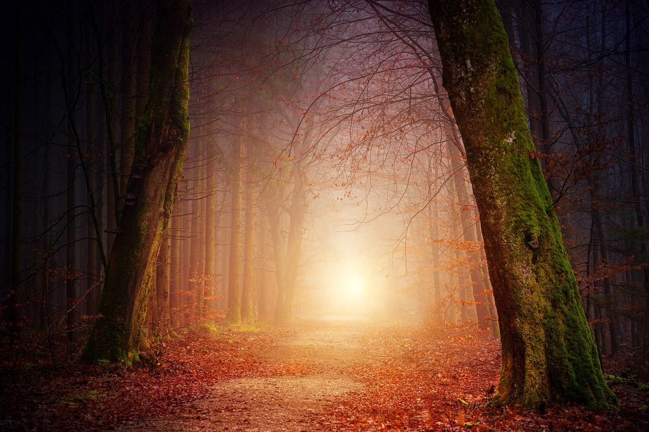 nature-3151869_1280 (1)
