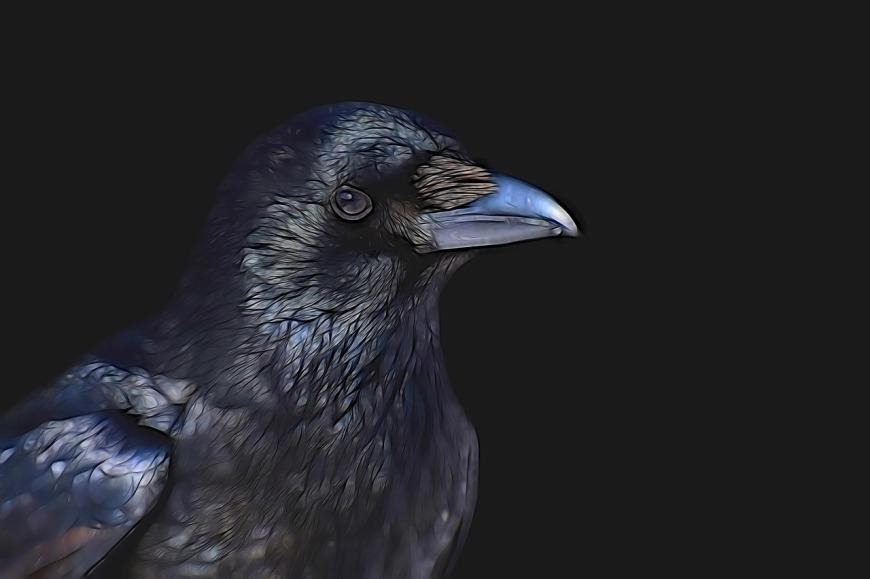 raven-3287119_1280
