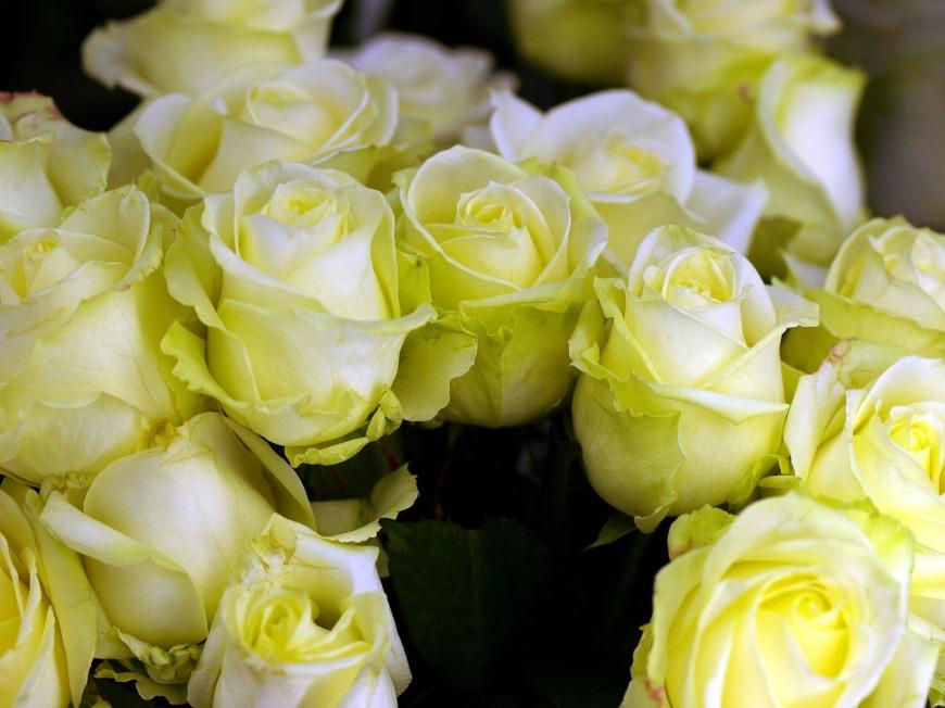 flower-3245795_1280
