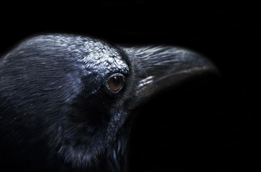 Crow -
