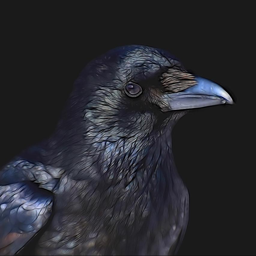 cropped-raven-3287119_1280